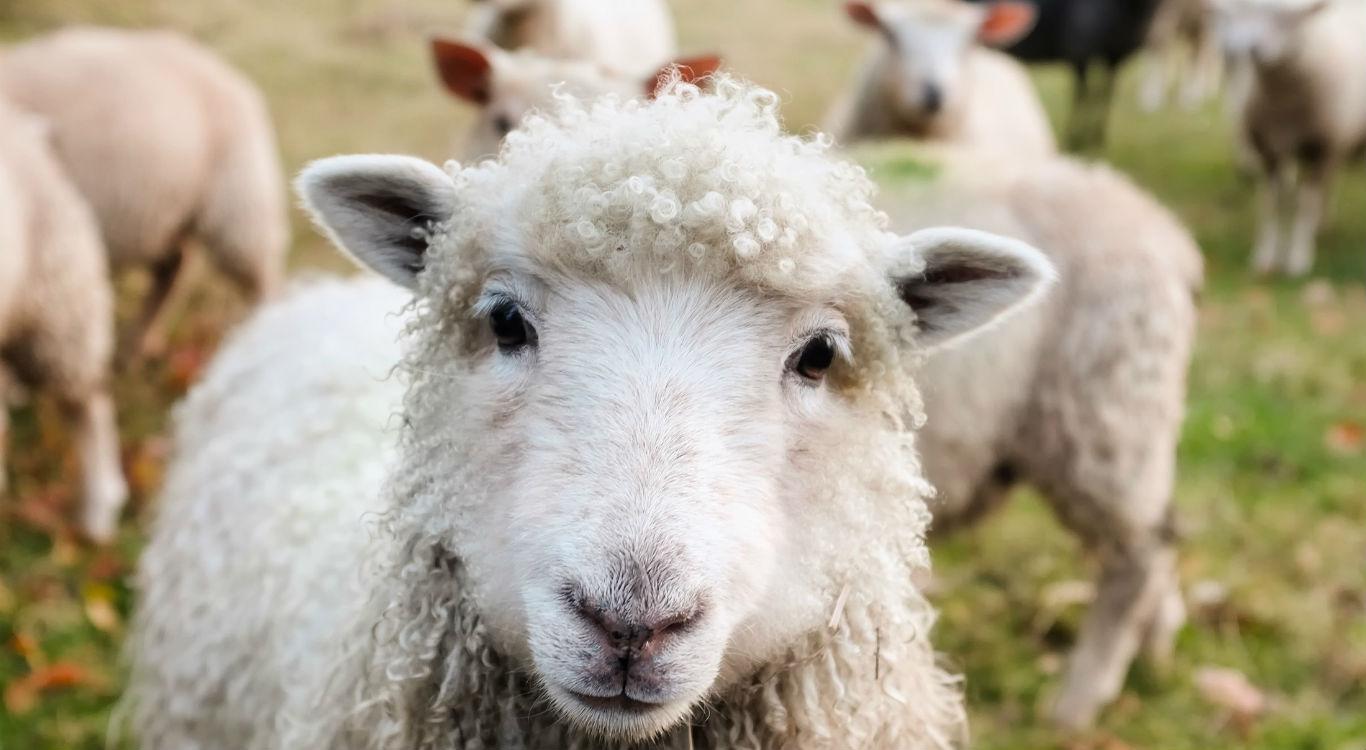 A necessidade de pastoreio | Missão Cristã Elim